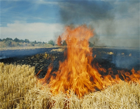 Permit-to-Burn